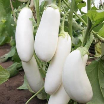 Halflong White