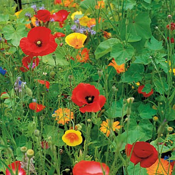 Wildbloemen mix