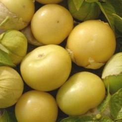 Tomatillo Amarilla