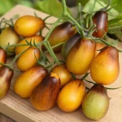Cherrytomaat Indigo Pear Drops