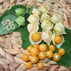 Kleine Ananaskers