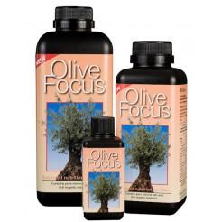 Olive Focus - 300 ml