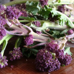 Purple Sprouting Early
