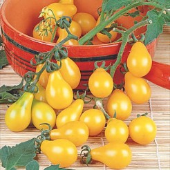 Yellow Pearshaped