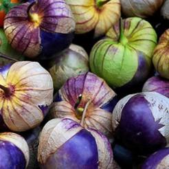 Tomatillo Purple