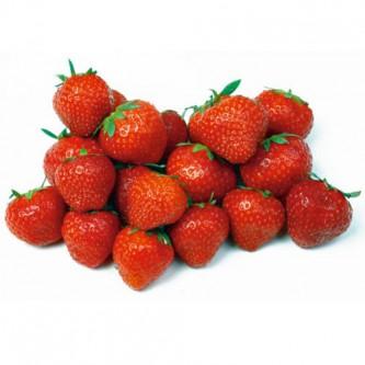 Erdbeere Grandian F1