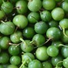 Groene Bes